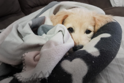 Want To Sleep Like A Tuckered Out Pup?